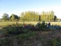 jardin 017