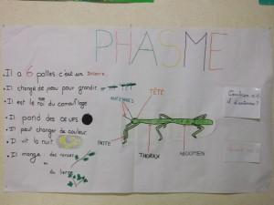 phasme008